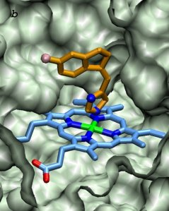 drugs_cyp11b2