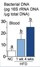 Bacterial DNA