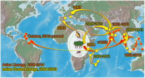 Arrival of Chikungunya Virus in the New World: Prospects for Spread and Impact on Public Health