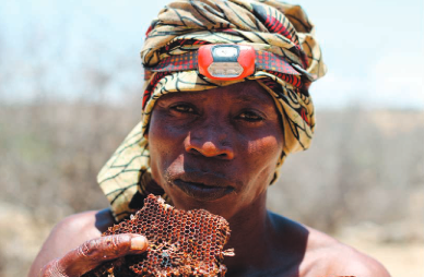 Hadza and honey