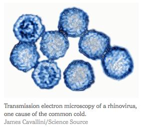 NYT Rhinovirus